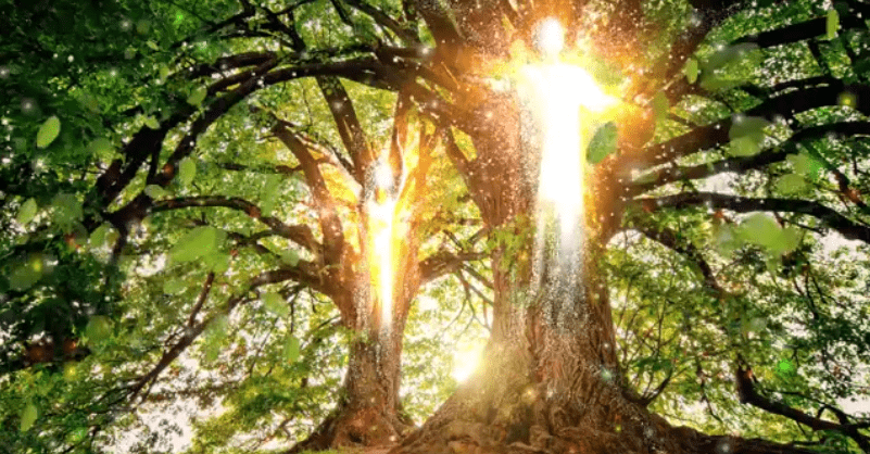 L'arbre de vie dans la Bible