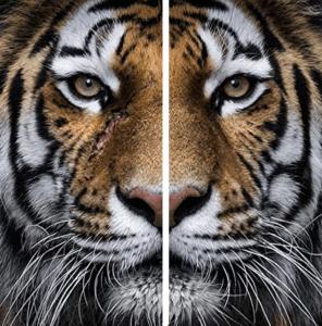 symétrie définition de la vie