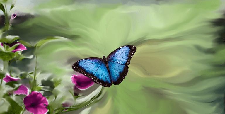 effet papillon, définition spirituelle critique