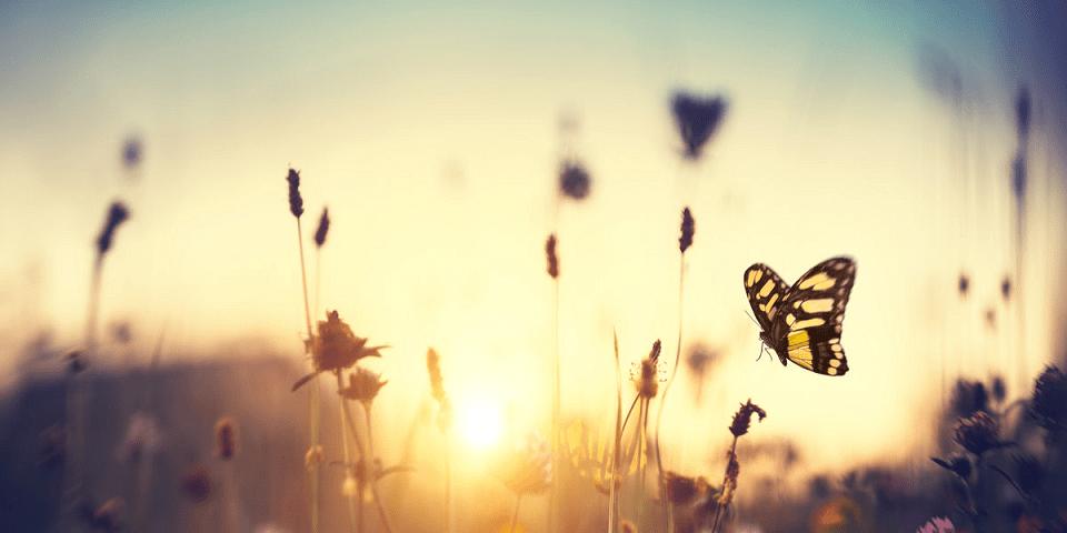 gratitude spiritualité