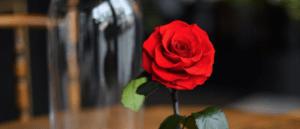 symbolisme de la rose